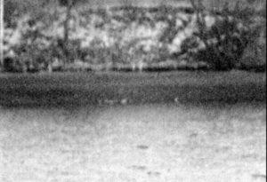 Утки через цифровик, 150 м